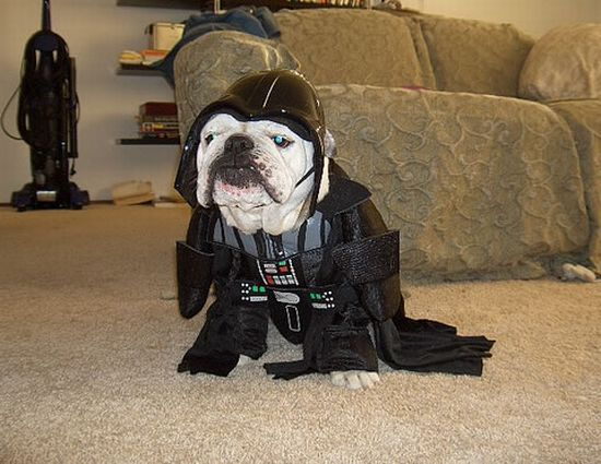 star_wars_dogs_costumes_01.jpg