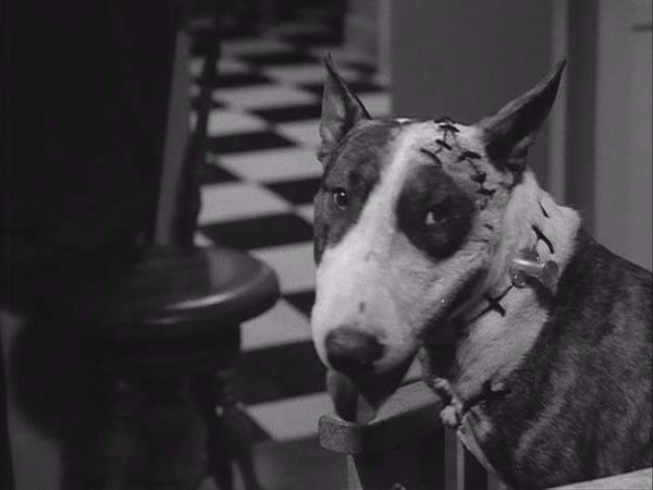 frankenweenie_tim_burton_original_movie_image_01.jpg
