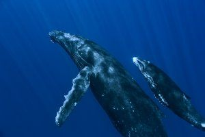 oceans_movie_image_disneynature_2010.jpg