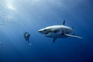 oceans_movie_image_disneynature_2010__1_.jpg