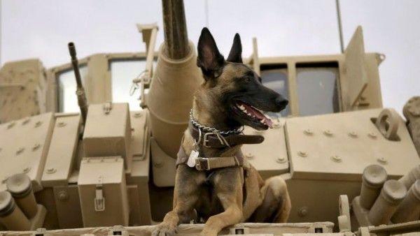 max-movie-dog
