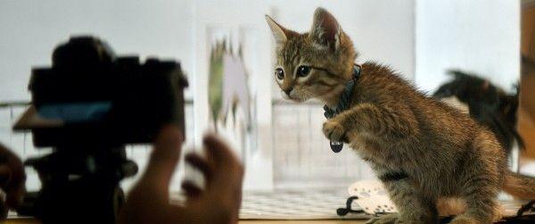 keanu-cat-image