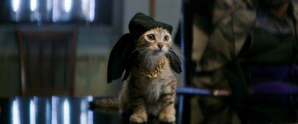 keanu-kitten-image