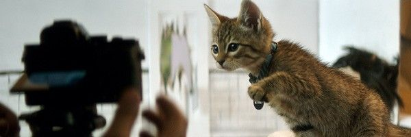 keanu-new-images-kitten