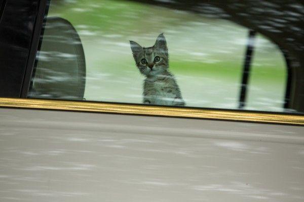 keanu-movie-image-cat