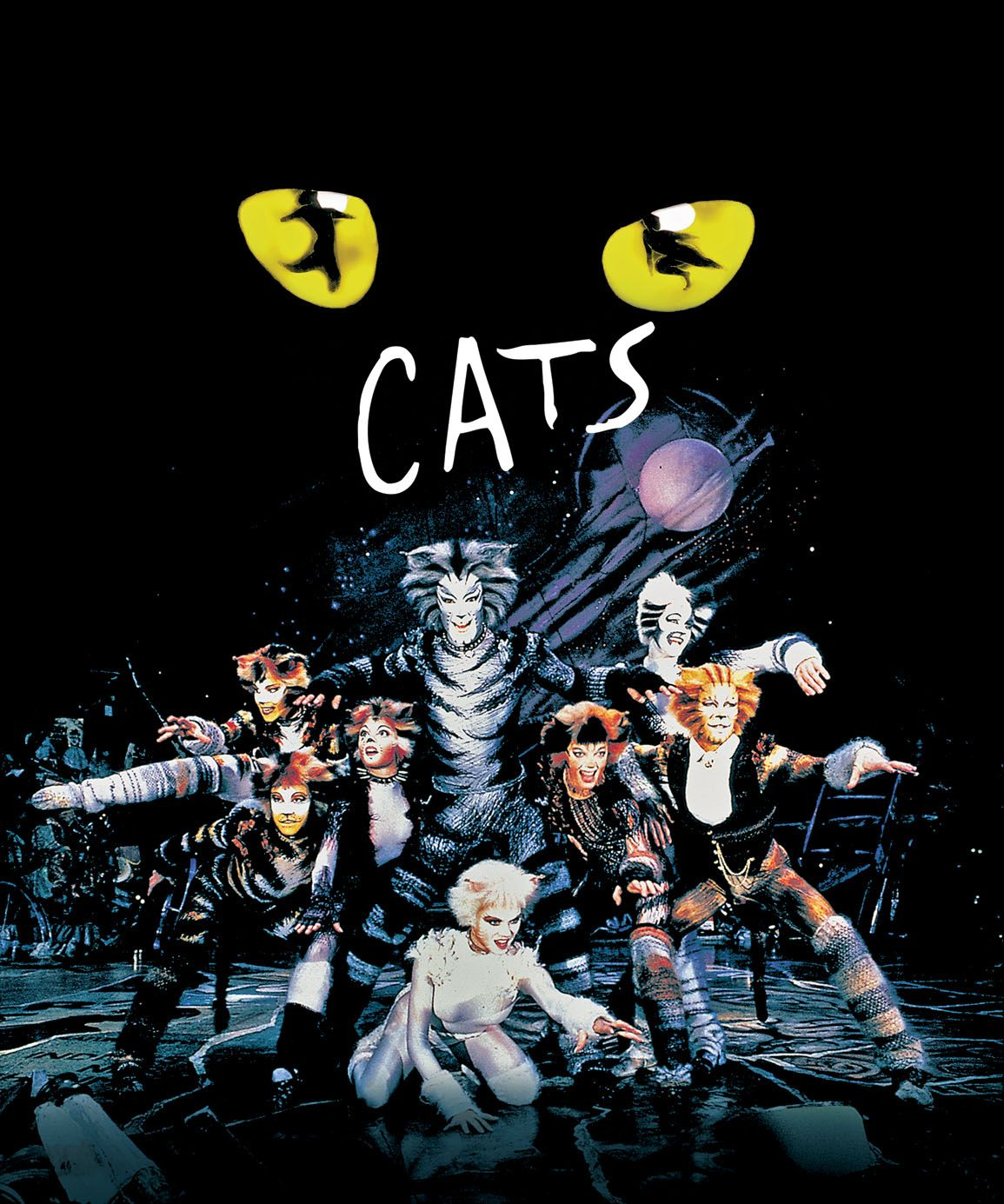 Musical Cats Video