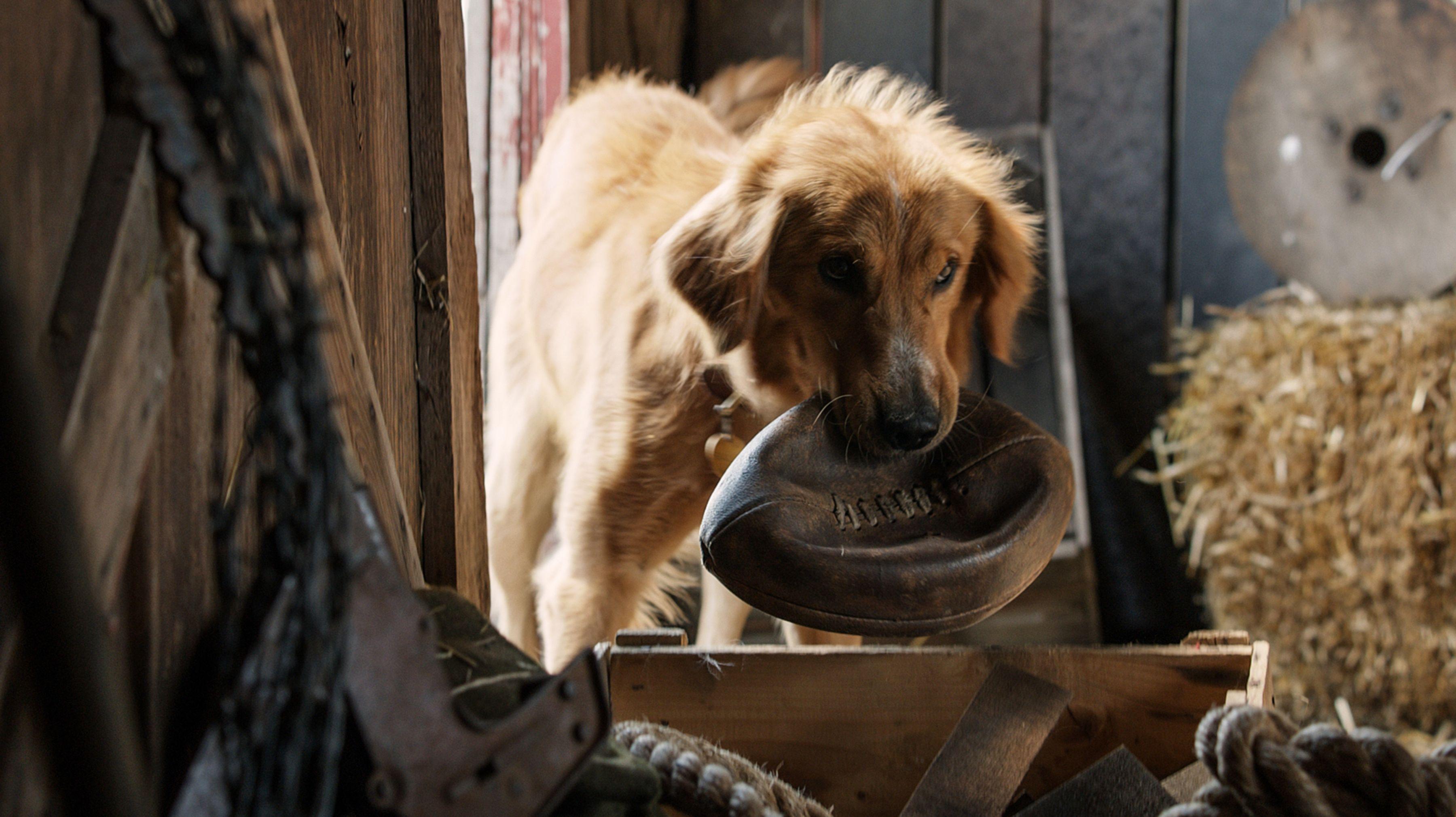 Výsledok vyhľadávania obrázkov pre dopyt a dog's purpose movie