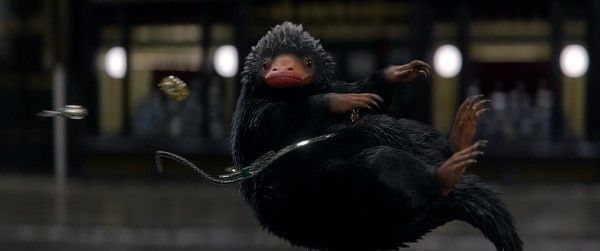 fantastic-beasts-and-where-to-find-them-niffler