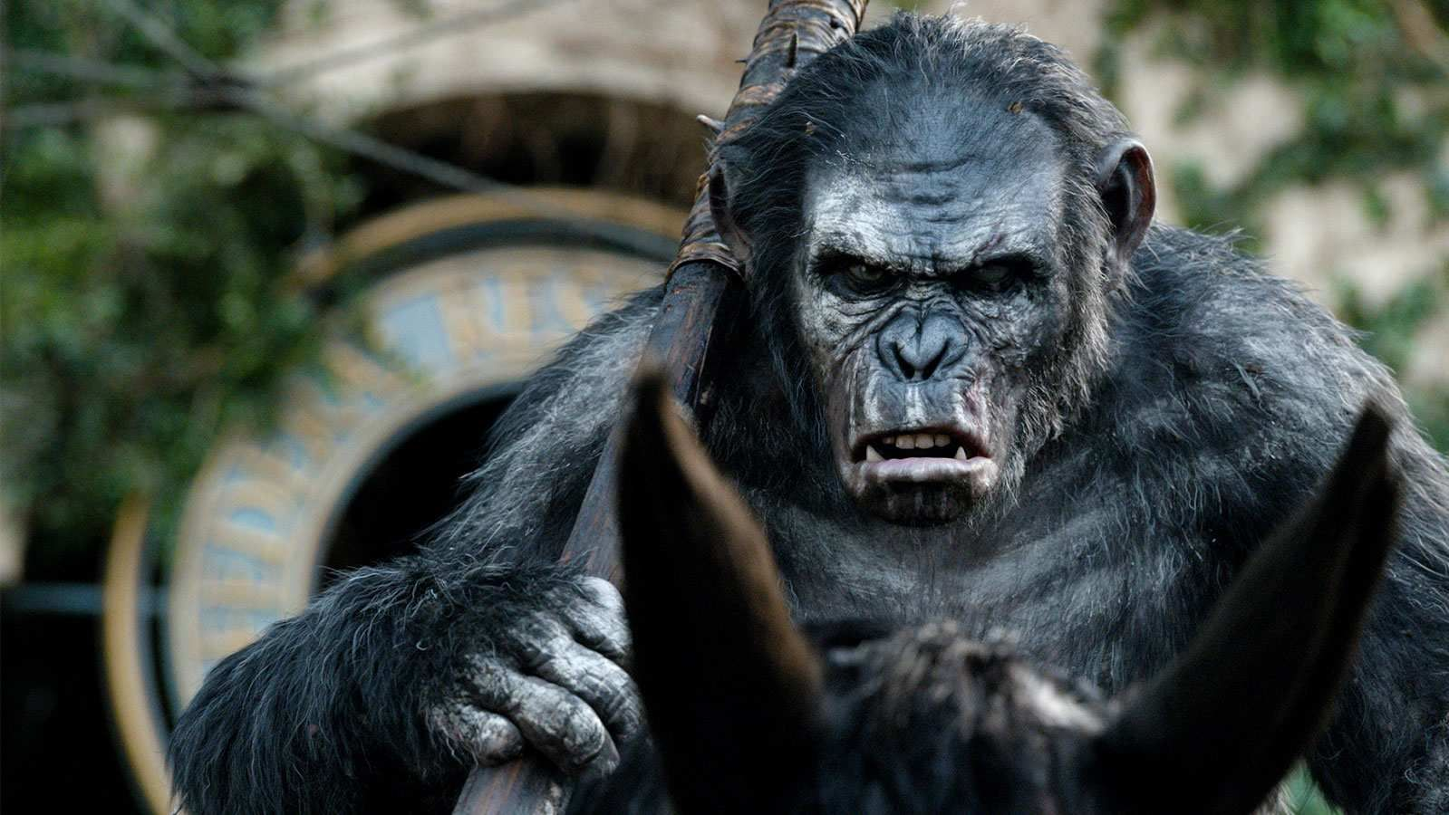 War For The Planet Of The Apes Is Koba Dead Collider
