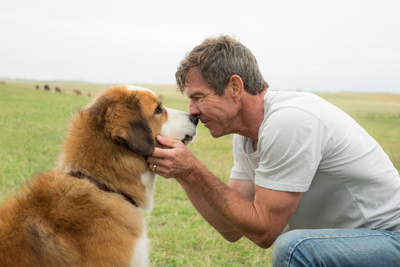 Image result for a dog's purpose movie images