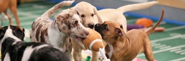 puppy-bowl-slice