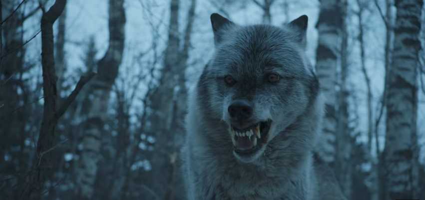 Game Of Thrones Direwolves Explained Collider