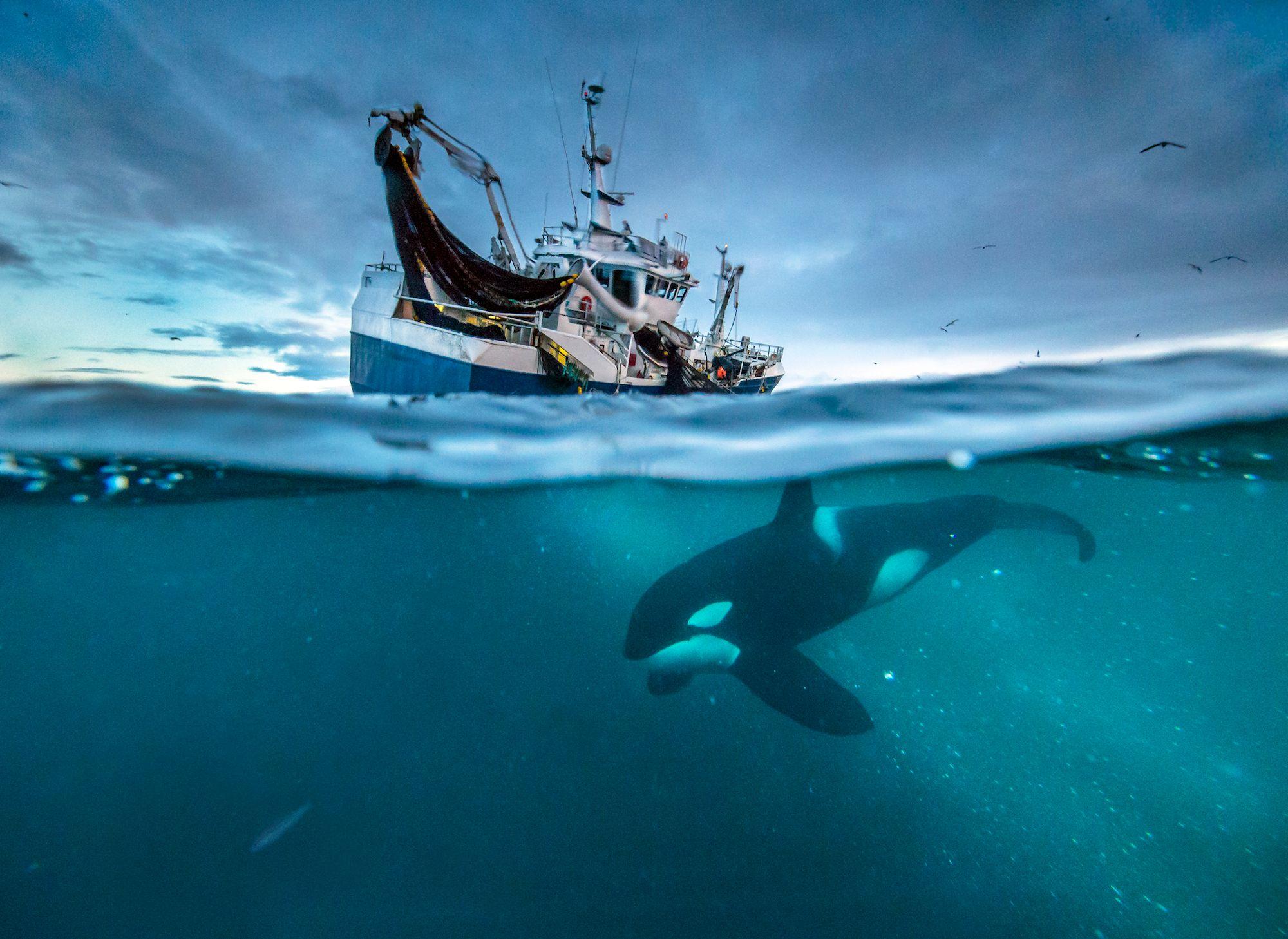 Three incredible sea stories