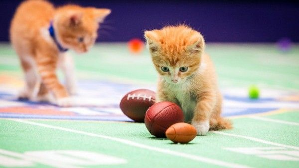 kitten-bowl-image-4