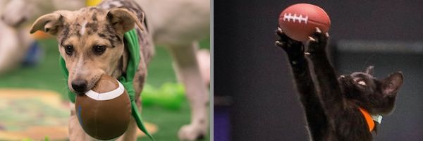 puppy-bowl-kitten-2018-slice