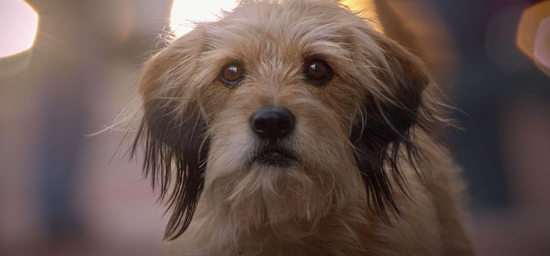 benji reboot image - 'Benji' Trailer Reveals Netflix Reboot of the Adorable Dog Franchise