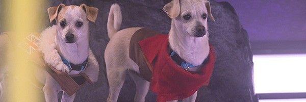 overwatch-puppy-rumble