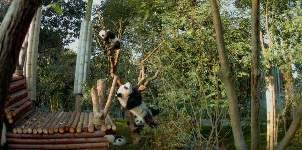 pandas-social