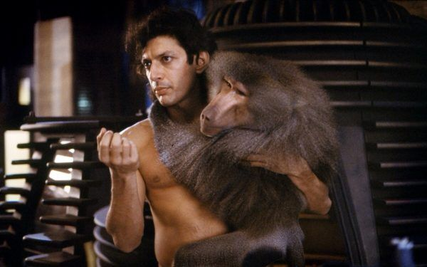 the-fly-jeff-goldblum