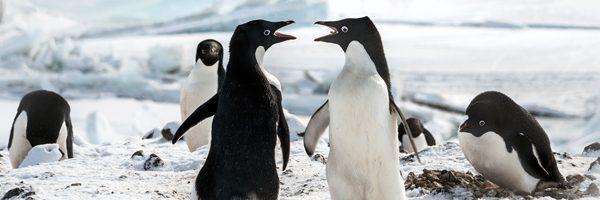 penguins-soundtack-clip-harry-gregson-williams