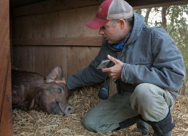 biggest-little-farm-john-molly-chester-interview