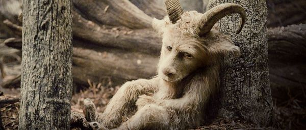 Where the Wild Things Are movie (9)