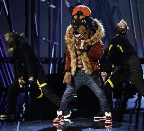 masked-singer-rottweiler-performance
