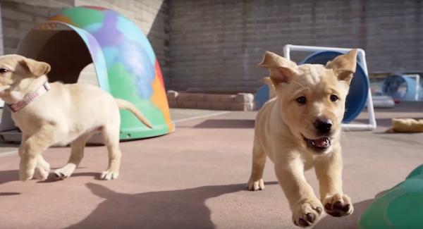 disney-plus-pick-of-the-litter-puppies
