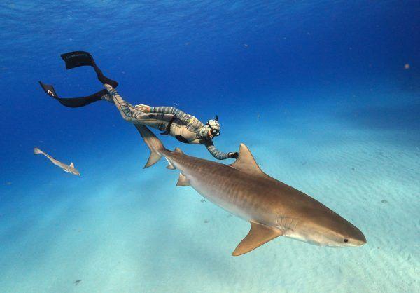 extinct-or-alive-forrest-galante-shark