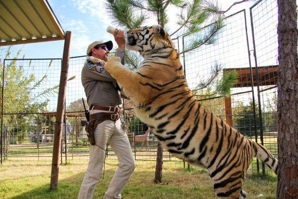 tiger-king-1