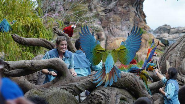 magic-of-disneys-animal-kingdom-parrots