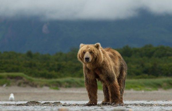 bears-movie-image