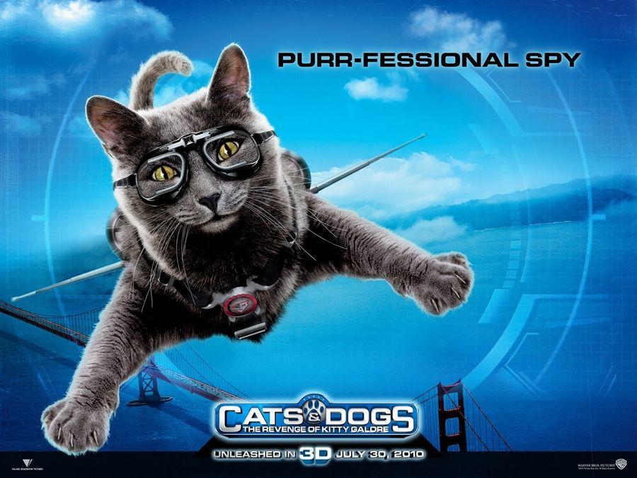 תוצאת תמונה עבור Cats & Dogs: The Revenge Of Kitty