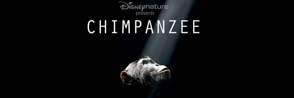 chimpanzee-slice