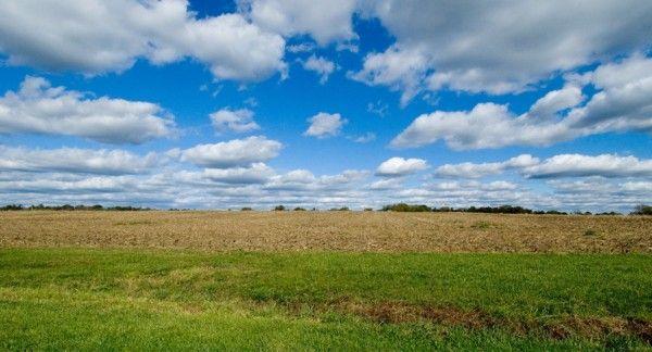 empty-field