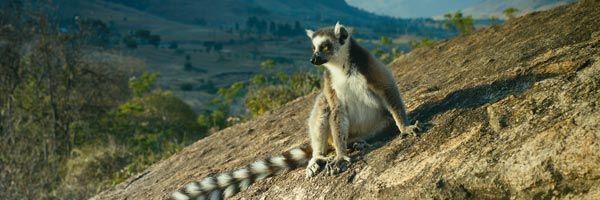 island-of-lemurs-madagascar-slice