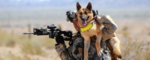 military-dog-movie-max-slice