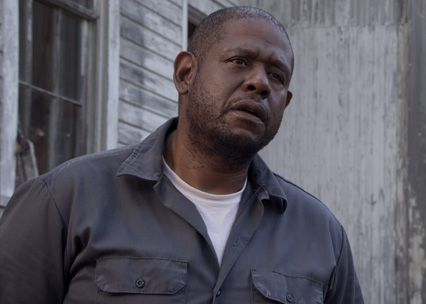 repentance-forest-whitaker