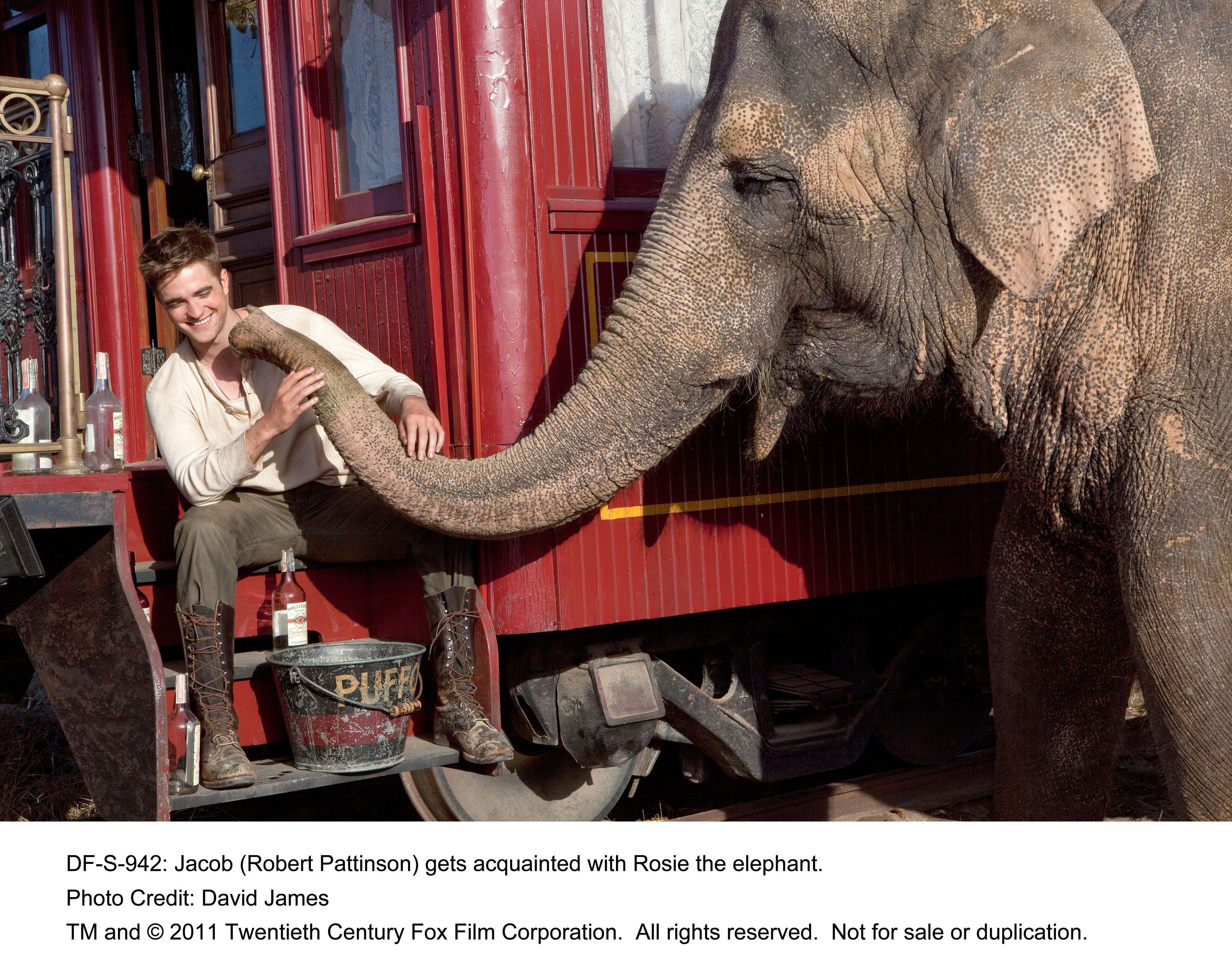 water for elephants review Water for elephants, an adaptation of the sara gruen bestseller about the  benzini brothers circus in 1931, brings its big top to the big screen.